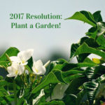 2017 Resolution: Plant a Garden!
